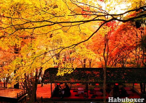 Habu04