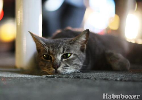 Habu07