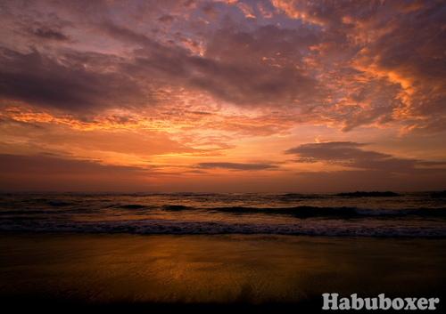 Habu16