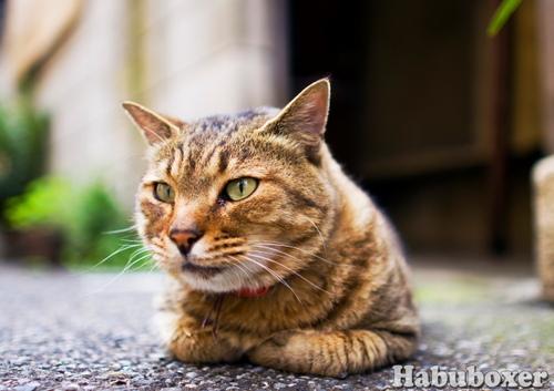 Habu21